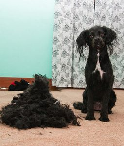 dog-grooming-disasters